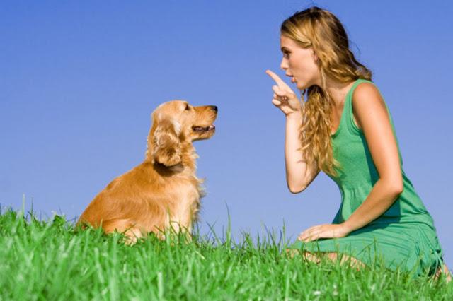 Huấn luyện chó cần những nguyên tắc gì?