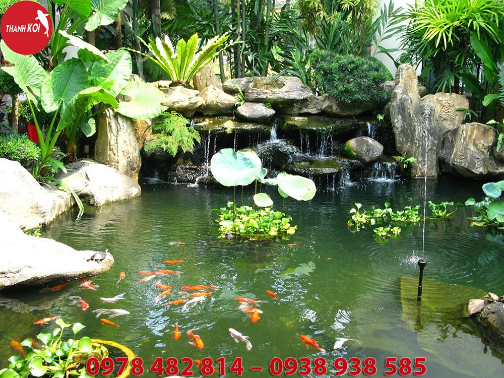 Thi công thiết kế hồ cá koi đẹp, chất lượng tại Tphcm